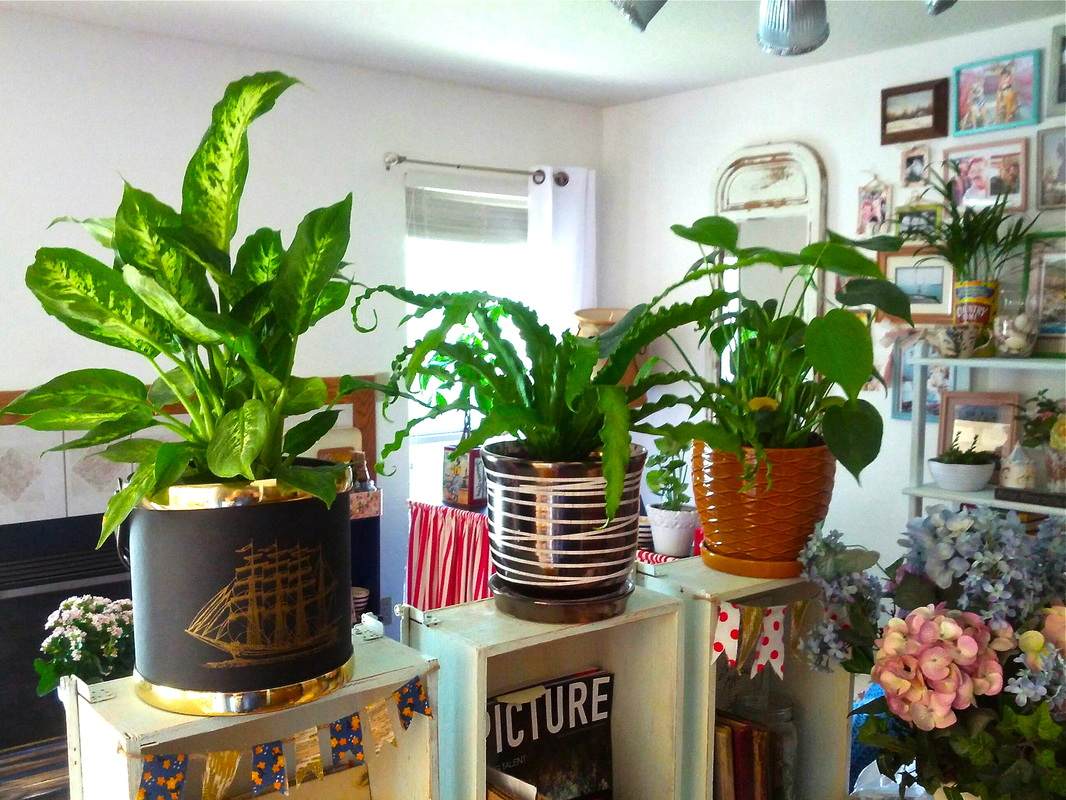 The simplest ways to make the best of dividing space for Plant decorations home