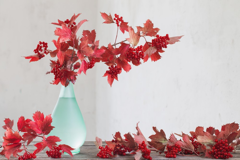 Branches in a Vase