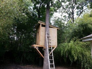 The Lean-To Tree House