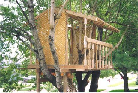 The Open Tree House
