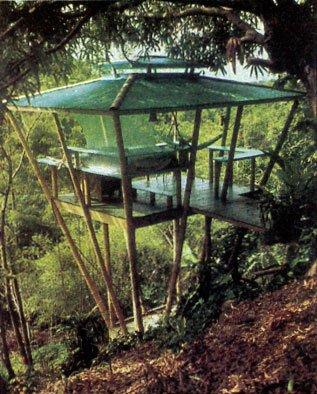 The Unique Tree House