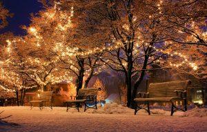 #8 – Decorate Trees